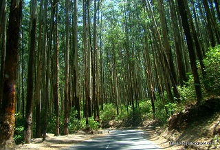 Mysore – Ooty – Coorg